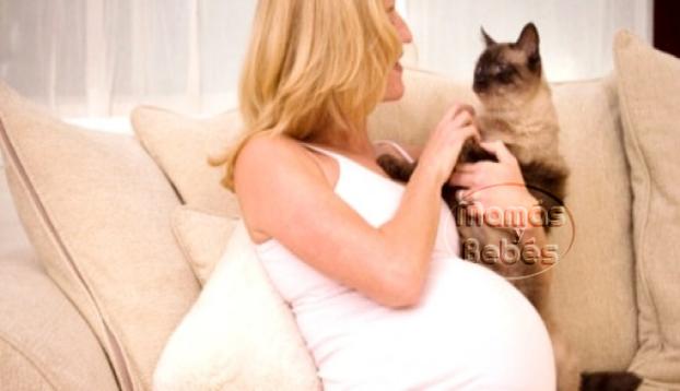 toxoplasmosis, gatos y embarazo